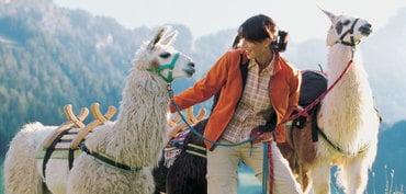 Lama & Alpakatrekking