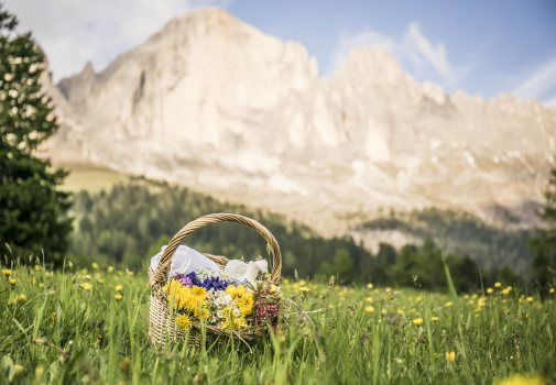 Mountain wellness from the Moseralm herbal garden